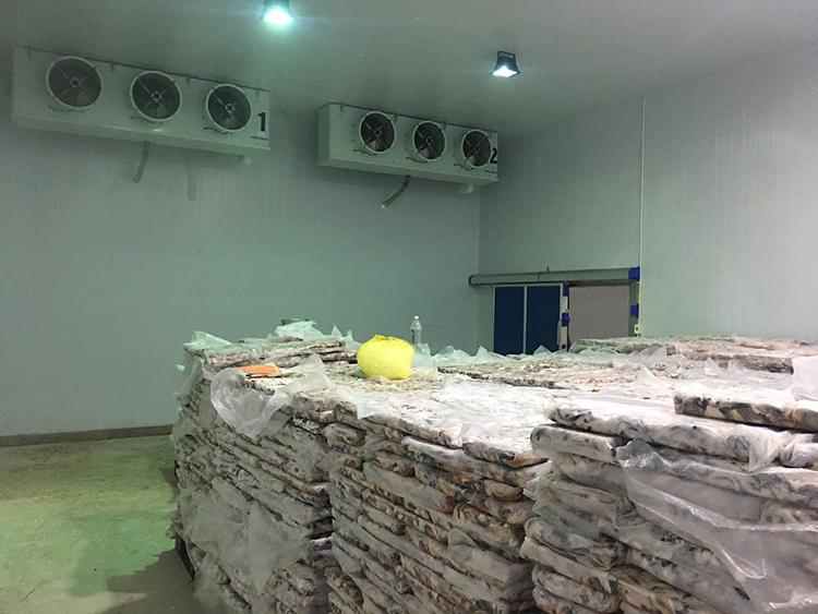Kho lạnh bảo quản thủy sản